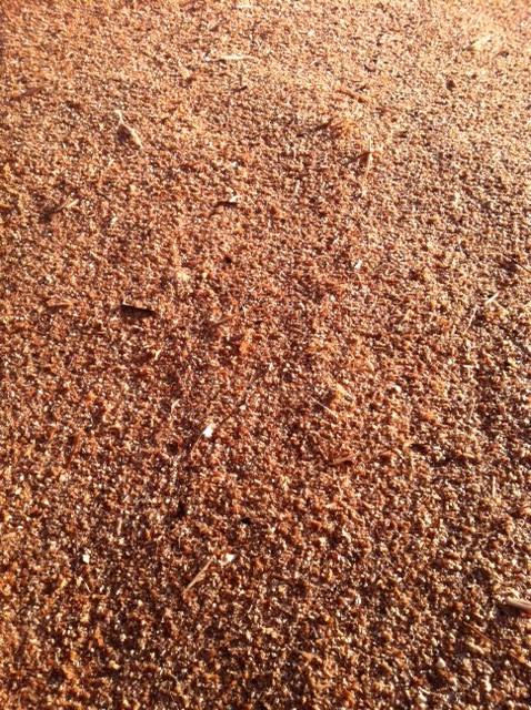 cedar sawdust 1
